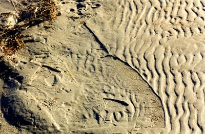 Strange Imprints